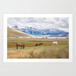 Torres del Paine - Wild Horses Art Print