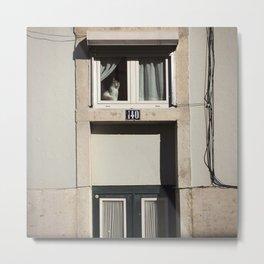 Spying Cat Metal Print