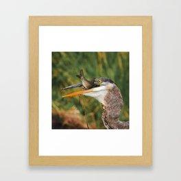 Great Blue Heron I Framed Art Print