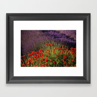Lavender and Poppies, Hood River Valley Framed Art Print