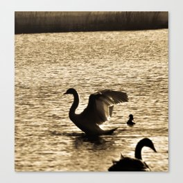 Stretching Swan Canvas Print