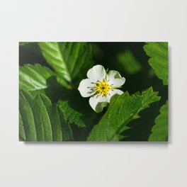 Wild Strawberry Flower Metal Print