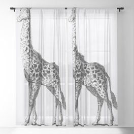 Giraffe from Zoological lectures delivered at the Royal institution in the years 1806-7 illustrated Sheer Curtain