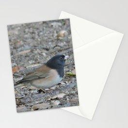 Dark-Eyed Junco Foraging Stationery Cards