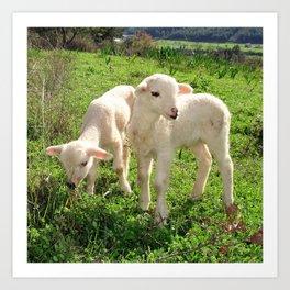 Spring Lambs Grazing On Farmland Art Print