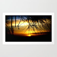Sunset between Norfolk pine Needles Art Print