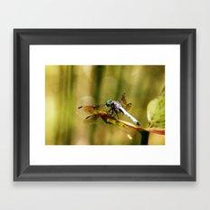 Dragonfly 01 Framed Art Print