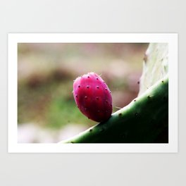 Prickly Pear Cactus Fruit Art Print