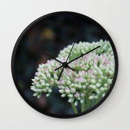 Softnest Against The Dark.  Flower garden photography Wall Clock