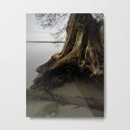 the old tree Metal Print