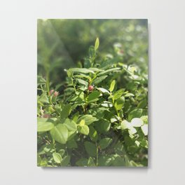 Underbrush wonders in the forest Metal Print