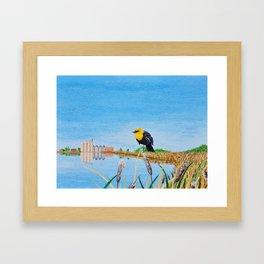 Yellow-Headed Blackbird in the Cattails Framed Art Print
