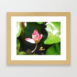 Hanalei Lotus, by Mandy Ramsey, Haines, AK Framed Art Print