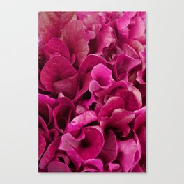Pink Foliage Photo Canvas Print