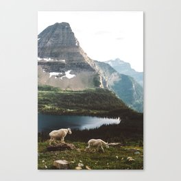 A Walk With The Mountain Goats Canvas Print
