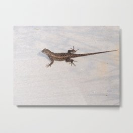 Heat-Loving Lizard Metal Print