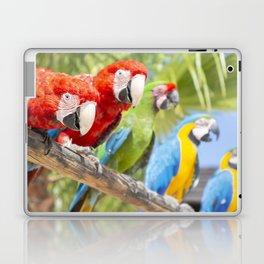 Curious macaws Laptop & iPad Skin