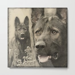 Working German Shepherd Dog - GSD Metal Print