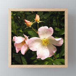 The Sally Holmes Single Rose Framed Mini Art Print