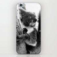 koala iPhone & iPod Skins featuring Koala by Alan Hogan