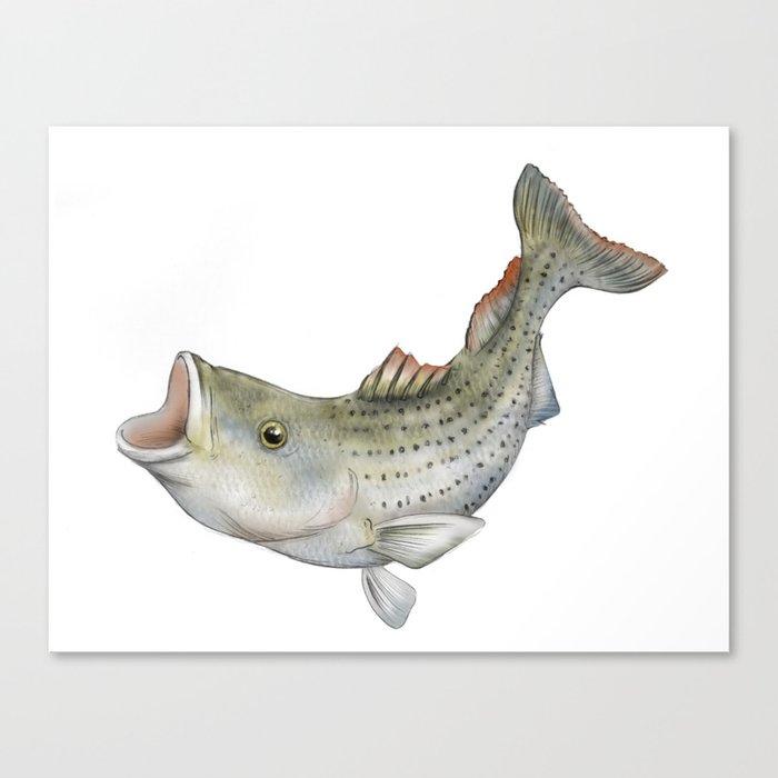 Striped Bass Canvas Print By Sambock Society6