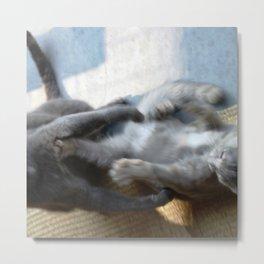 Kitten Wars Metal Print