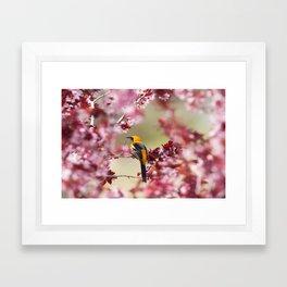 Oriole in Plum Tree Framed Art Print