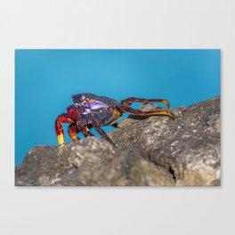 crab Canvas Print