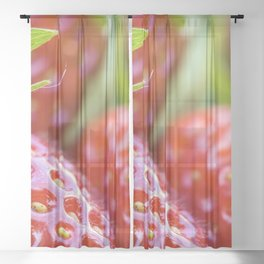 Fresh strawberries Sheer Curtain