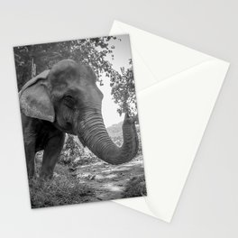 Elephant, Laos, Julie Gatto Stationery Cards