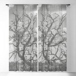 Ancient Tree, Survivor, Alive Sheer Curtain