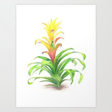 Bromeliad - Tropical plant Art Print