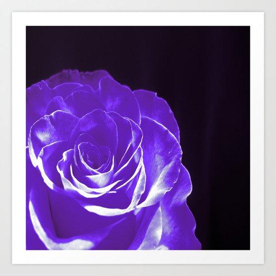 Colours Rose W Art Print