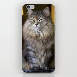 Mr. Cesare and Queen Cleopatra. Siberian cats iPhone Skin