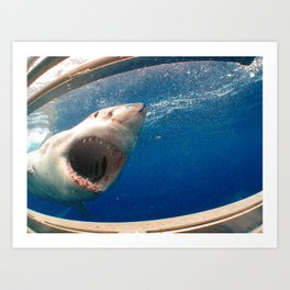 The great white shark, Carcharodon carcharias Art Print