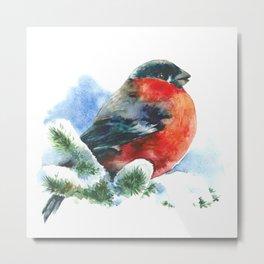 Christmas watercolor bullfinch Metal Print