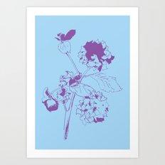 Hydranga - purple on blue Art Print