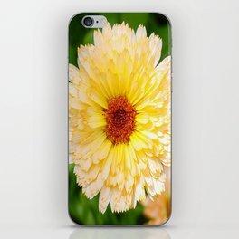 Beautiful Yellow Marigold Goldbloom Close Up  iPhone Skin
