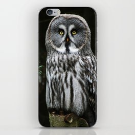 The Great Grey Owl iPhone Skin