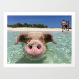swimming pig Art Print