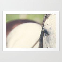 Grey Horse Art Print