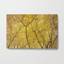 Colorado Autumn in Yellow Metal Print