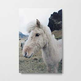 White Horse in Iceland Metal Print