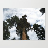 giants Canvas Prints featuring Giants by Jardine Photography