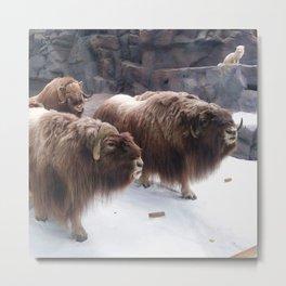 Winter Buffalo Metal Print