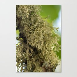 Branch Moss Canvas Print
