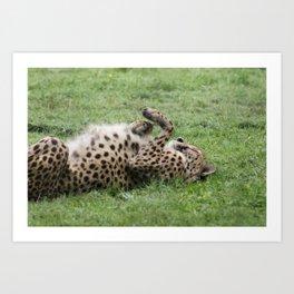 Cheetahs don't always run Art Print