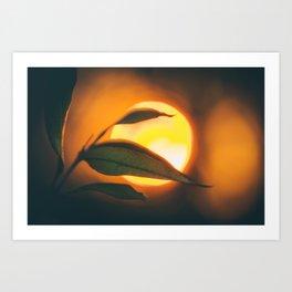 Absence of Light Art Print