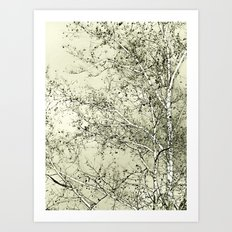 Sycamore Tree, Inky Green Toile Version Art Print