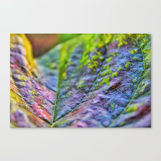 Beauty up close Canvas Print